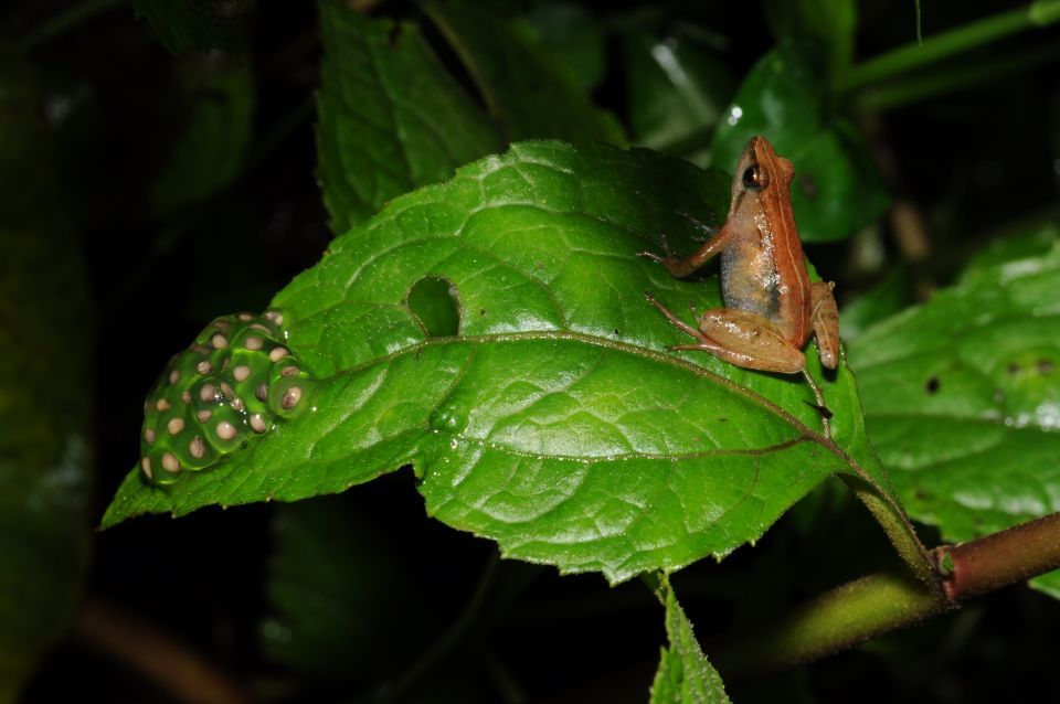 UAE researchers discover new species of frog in Ethiopia