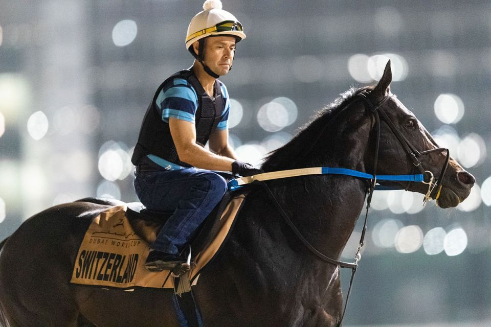 In pictures: Dubai World Cup runners get in some track work at Meydan Racecourse
