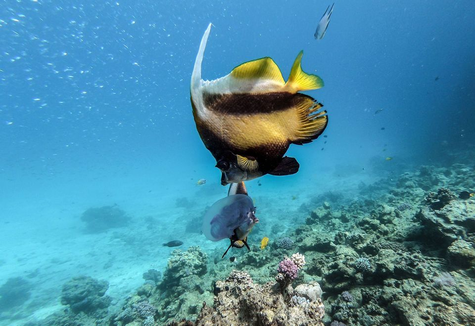 Gallery: Tourism in Egypt threatens Red Sea corals