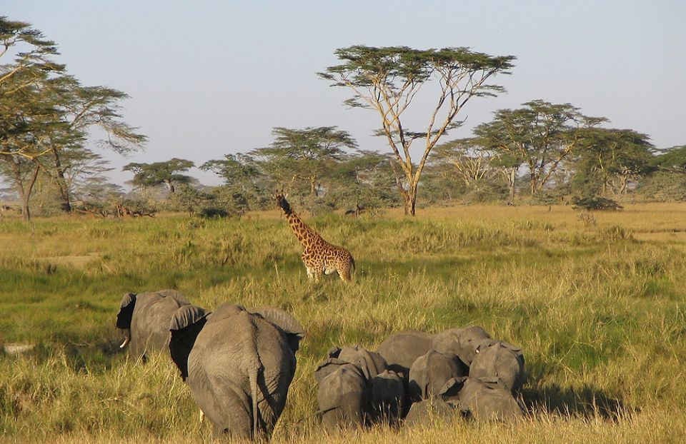 UAE hotel firm to open Serengeti lodge in Tanzania expansion