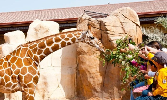 The Resort at Emirates Park Zoo unveils new chalets amid rebrand
