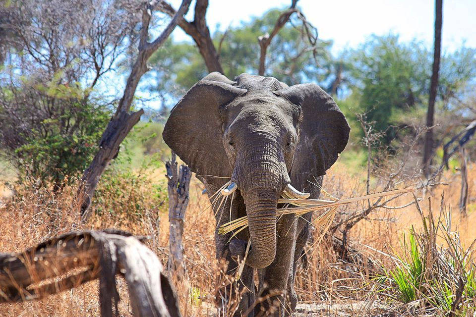 How much does an elephant cost? Zimbabwean minister reveals all
