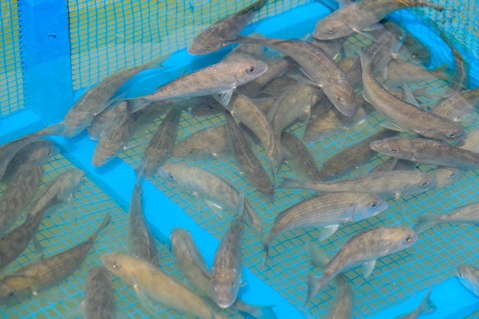 Abu Dhabi agency releases first fish batch to boost stocks
