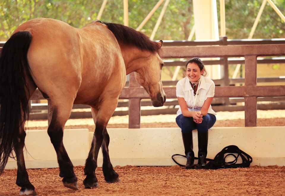What horses can teach business leaders