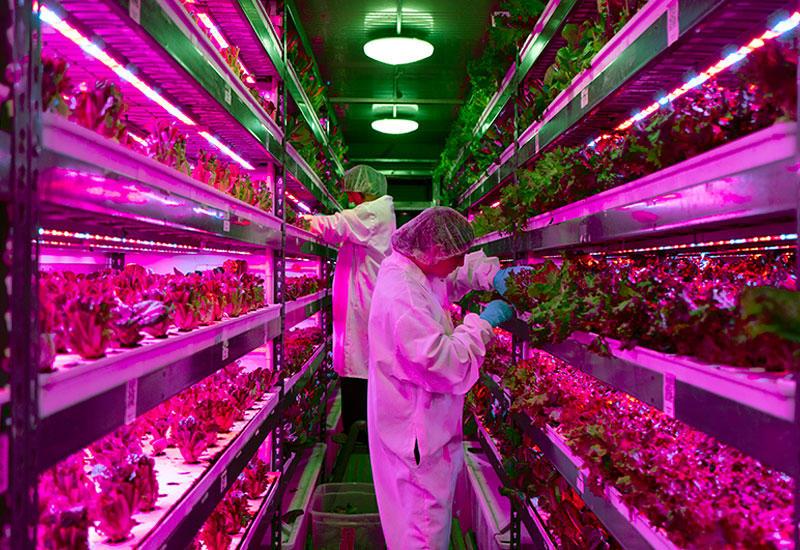 High-tech farmers sow seeds of revolution in Dubai desert