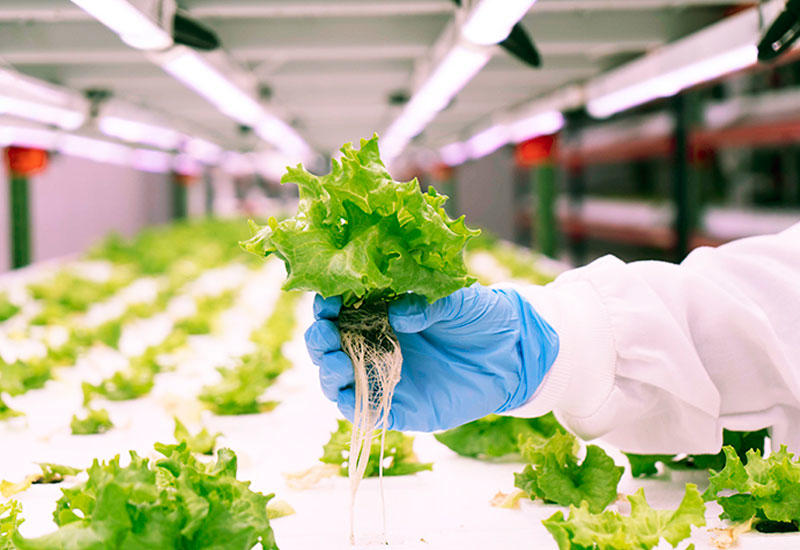Gallery: World's largest vertical farm will deliver fresh produce for millions of meals at Expo 2020