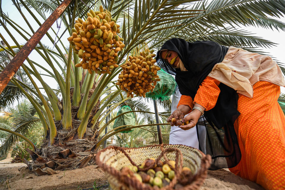 Gallery Explore Uae S Culture And Heritage At Liwa Date Festival