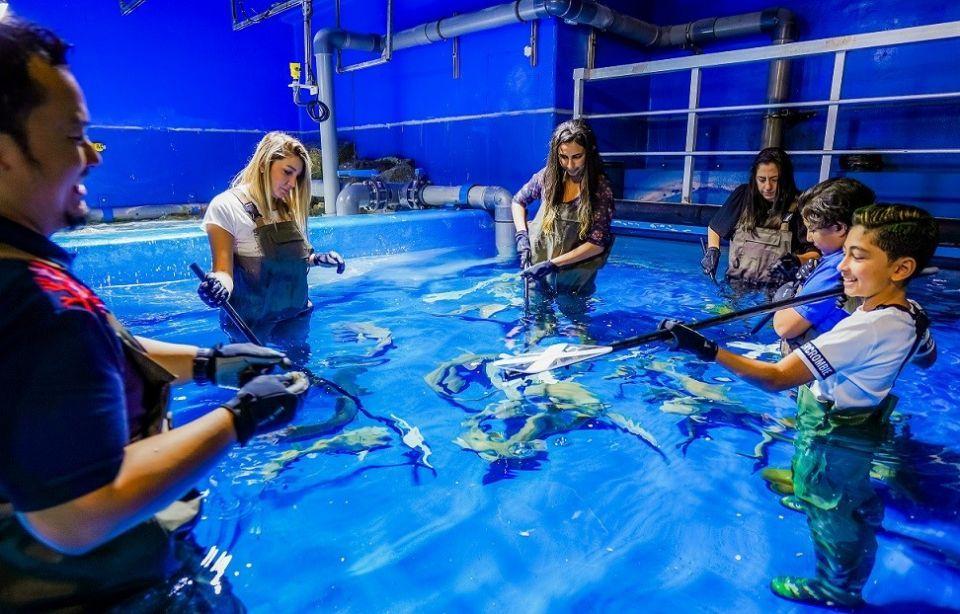 Dubai Aquarium launches new shark training experience