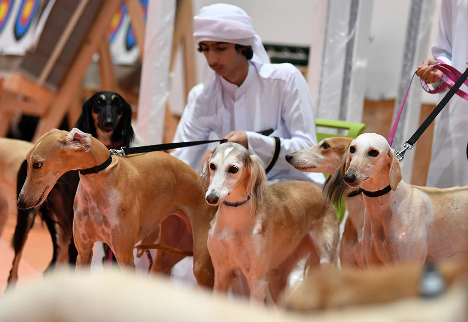 Gallery: Abu Dhabi International Hunting and Equestrian Exhibition 2019