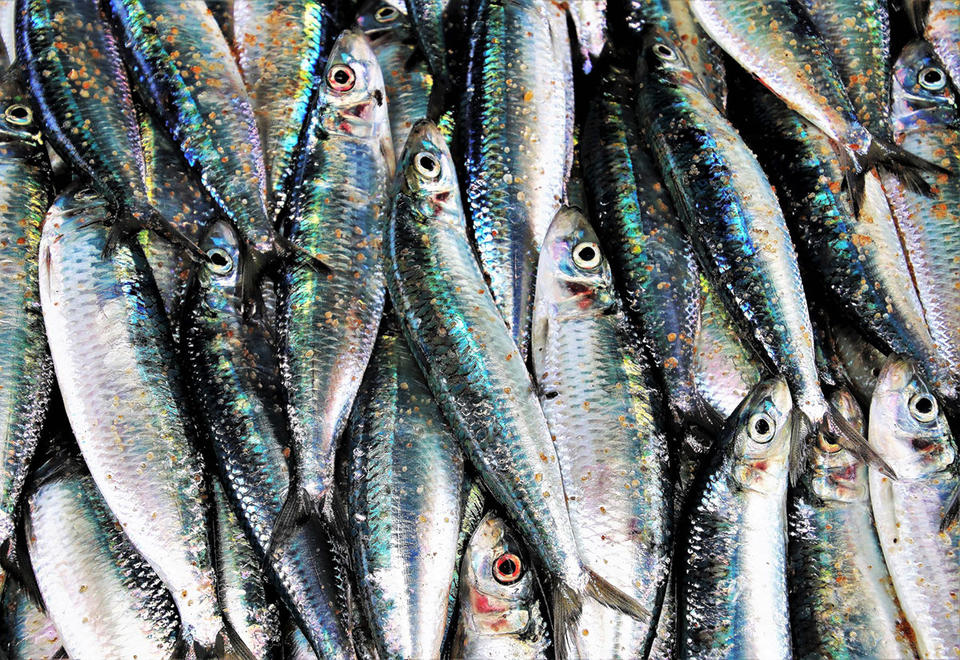 Bahrain issues health warning after 150kg of rotten fish seized - report