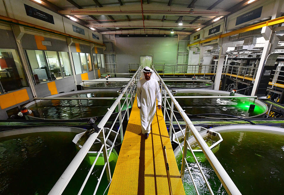 In pictures: Farming of Atlantic salmon in the deserts of Dubai