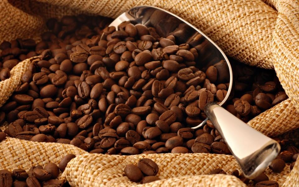 Saudi authority calls on UNESCO to protect coffee tradition