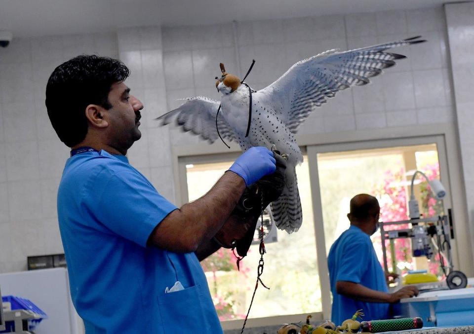 Abu Dhabi: Inside the world's largest falcon hospital