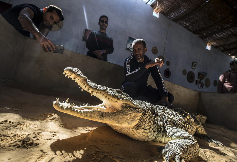 In pictures: Tourists snapping selfies with tame crocodiles in Egypt