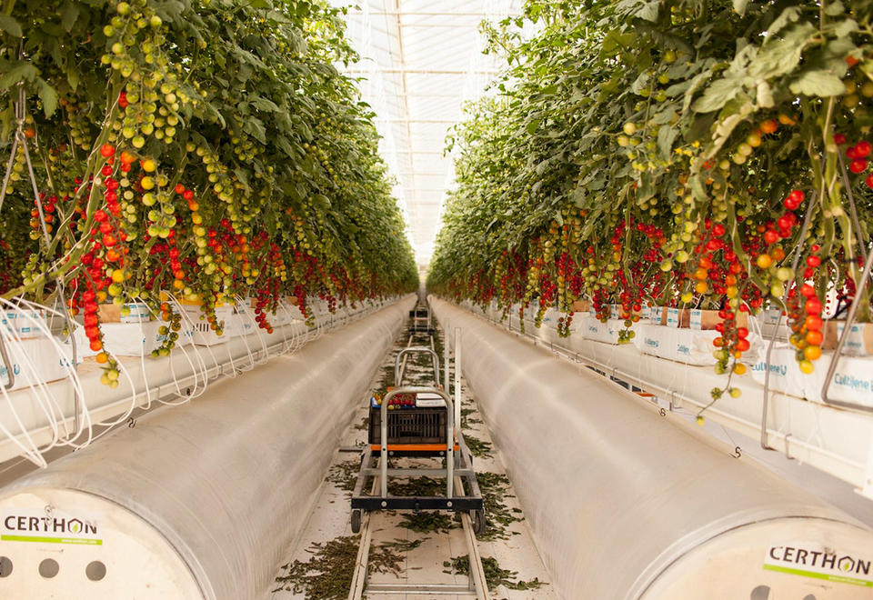 Pure Harvest to build $35m farm in Kuwait amid coronavirus food security concerns