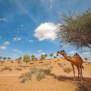 "Ras-Al-Khaimah-Camel.jpg ""title ="" Ras-Al-Khaimah-Camel.jpg ""/> </a> </p> <div class="