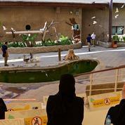 Dubai-Safari-Park.jpg
